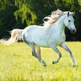 Francobolli      con categoria Cavalli   '